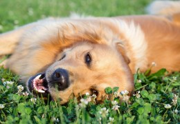Heartworm protection in Dogs